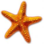 étoile-de-mer